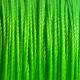 Bright Green #54